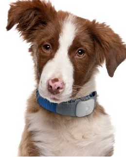 3 Pet Activity Trackers for iPhone / Android
