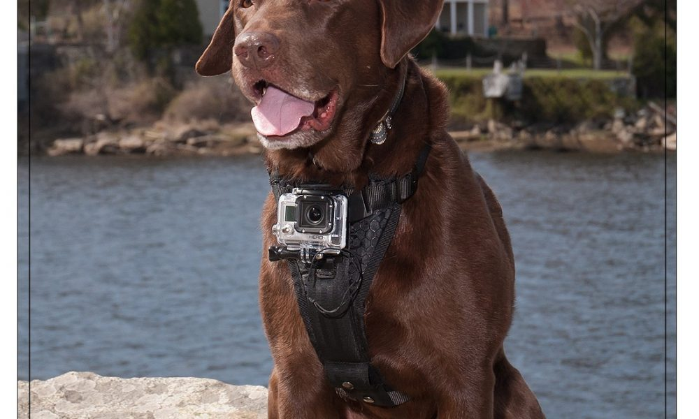 3 Cool Dog Mounts for Action Cams