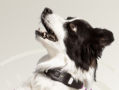 3 Smart Dog Fitness Trackers & Tools