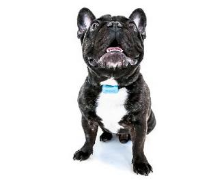 3 Smartphone-Enhanced Dog Activity Trackers