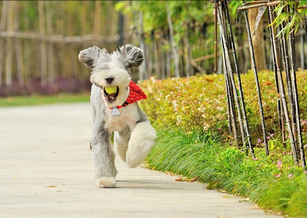 5 Android & iOS Compatible Pet Tracking Devices